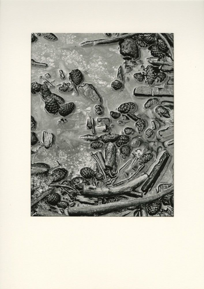 UNTITLED [BRANCHES/ PINE CONES/ WATER]. Dody Weston Thompson.