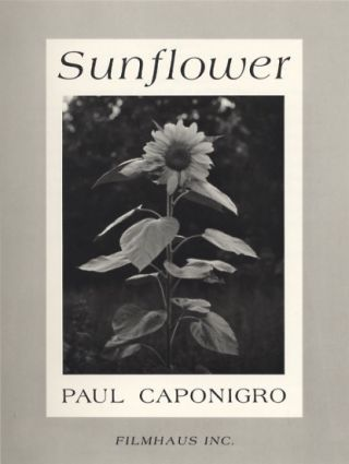 SUNFLOWER. Paul Caponigro